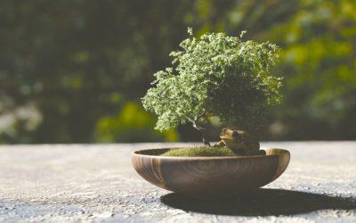Bonsai: guida in miniatura
